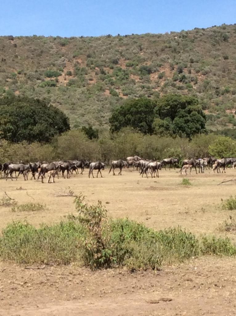 Tangulia Mara Animals 1