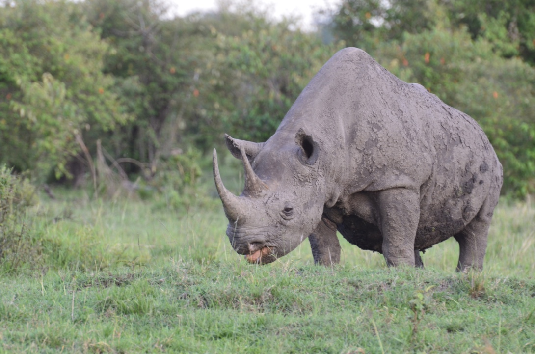 Tangulia Mara Animals 10