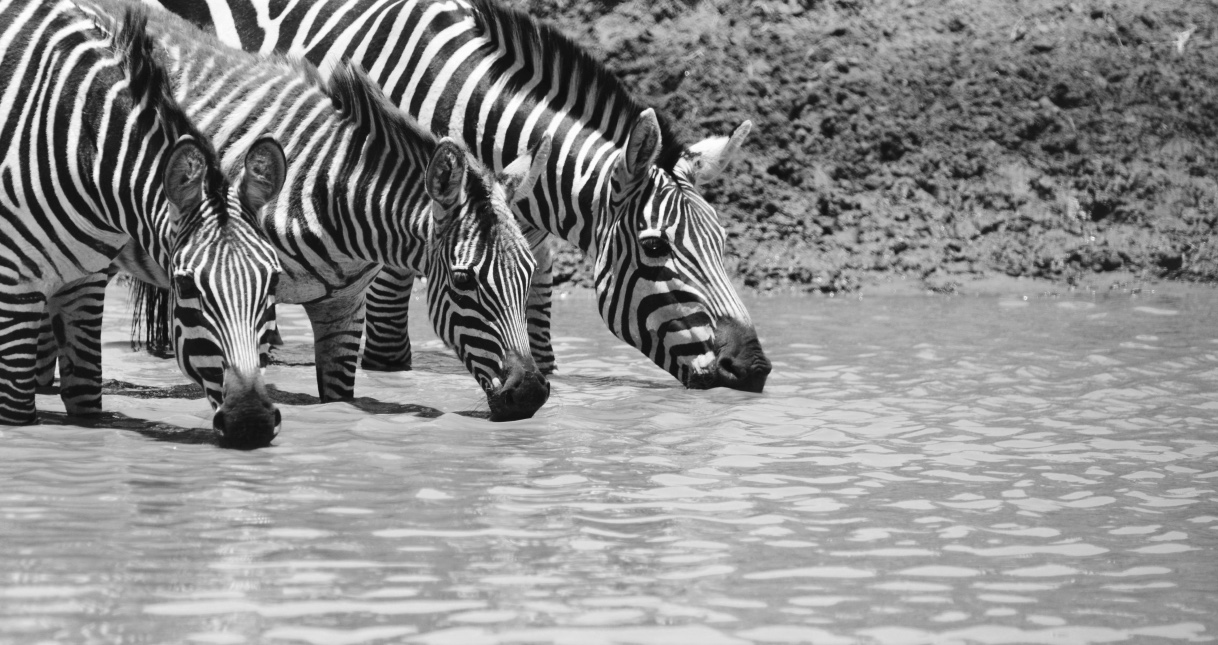 Tangulia Mara Animals 11