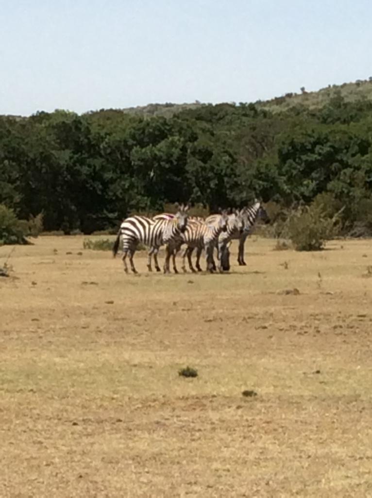 Tangulia Mara Animals 4