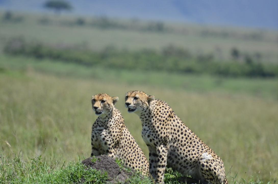 Tangulia Mara Cats 9