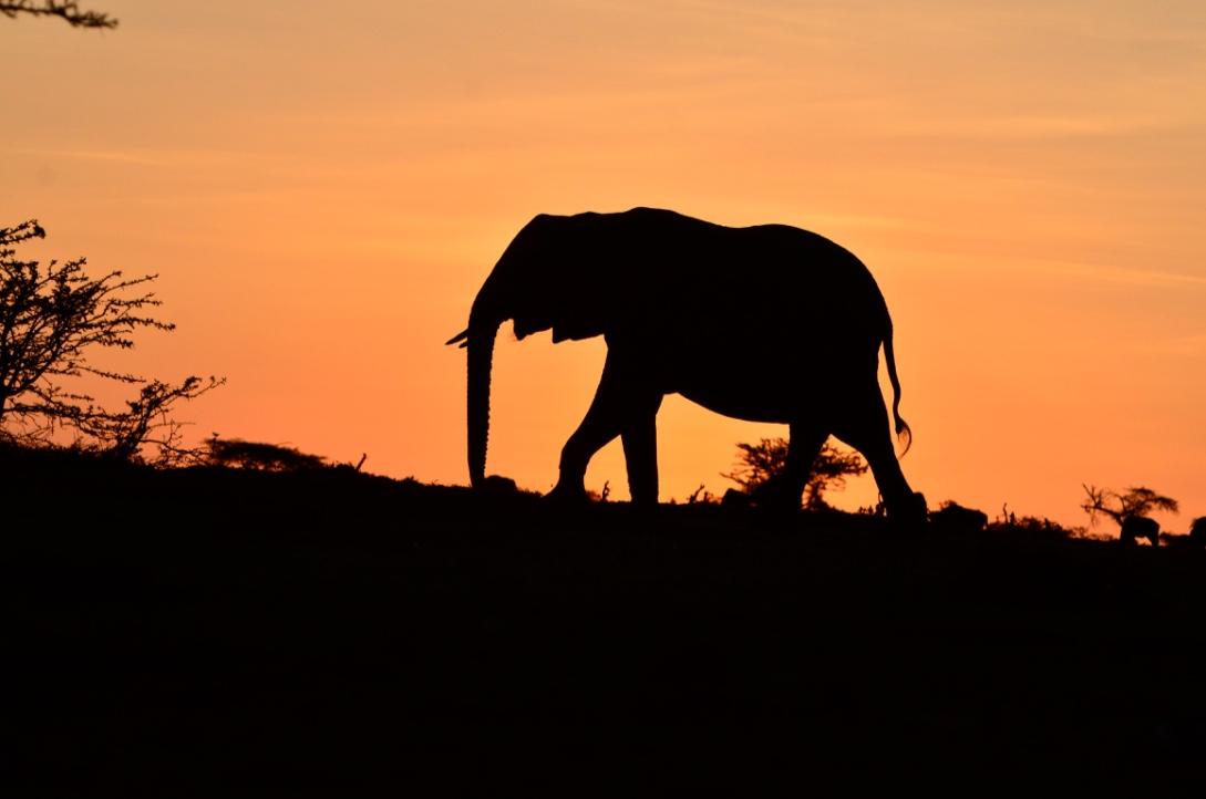 Tangulia Mara Elephants 1