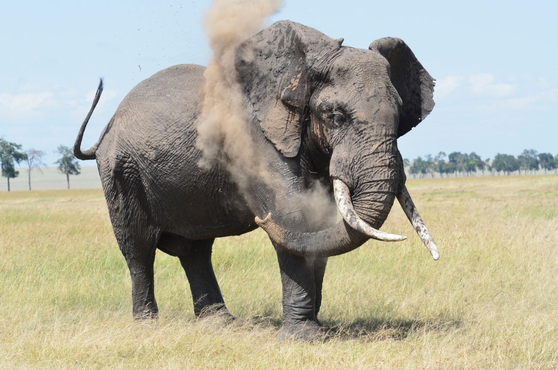 Tangulia Mara Elephants 6