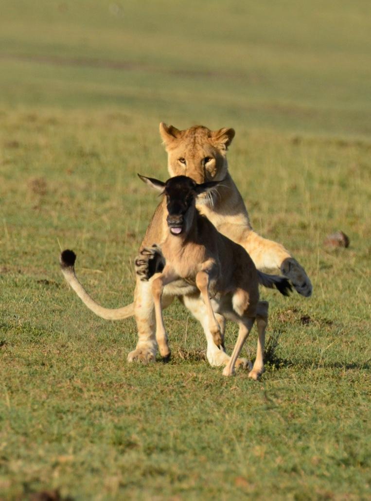 Tangulia Mara Lions 10