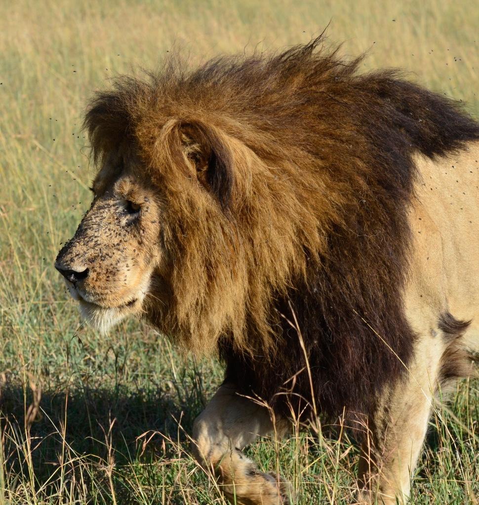 Tangulia Mara Lions 14