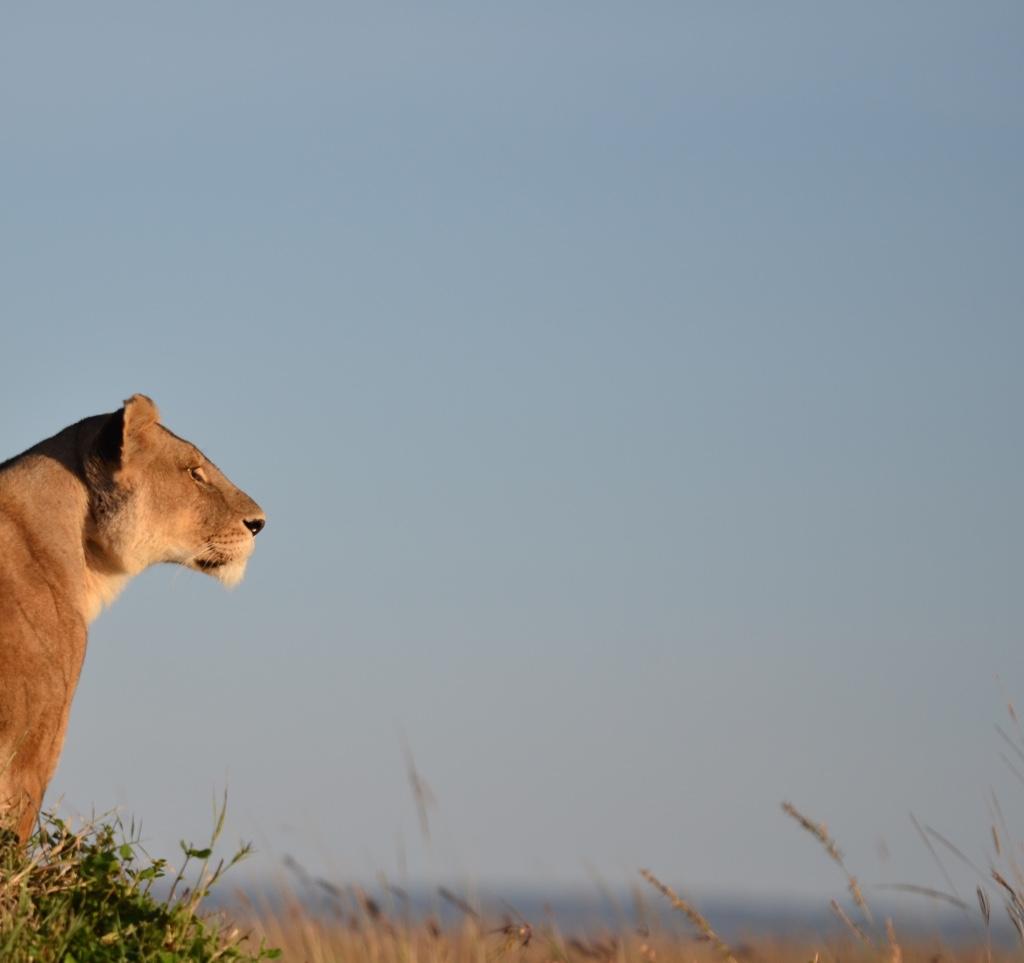 Tangulia Mara Lions 7