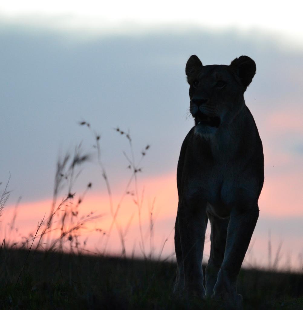 Tangulia Mara Lions 9