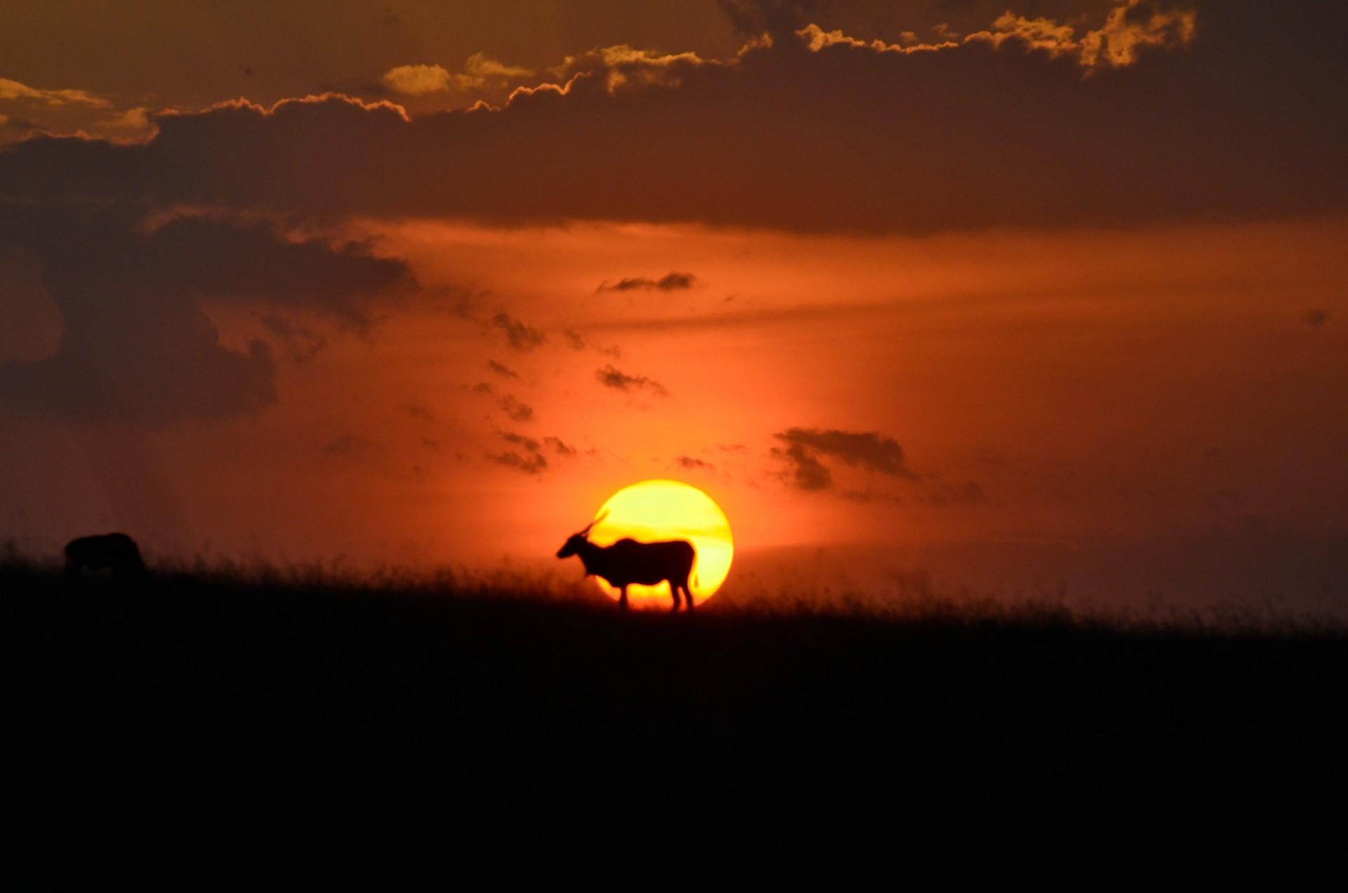 Tangulia Mara Migration 1