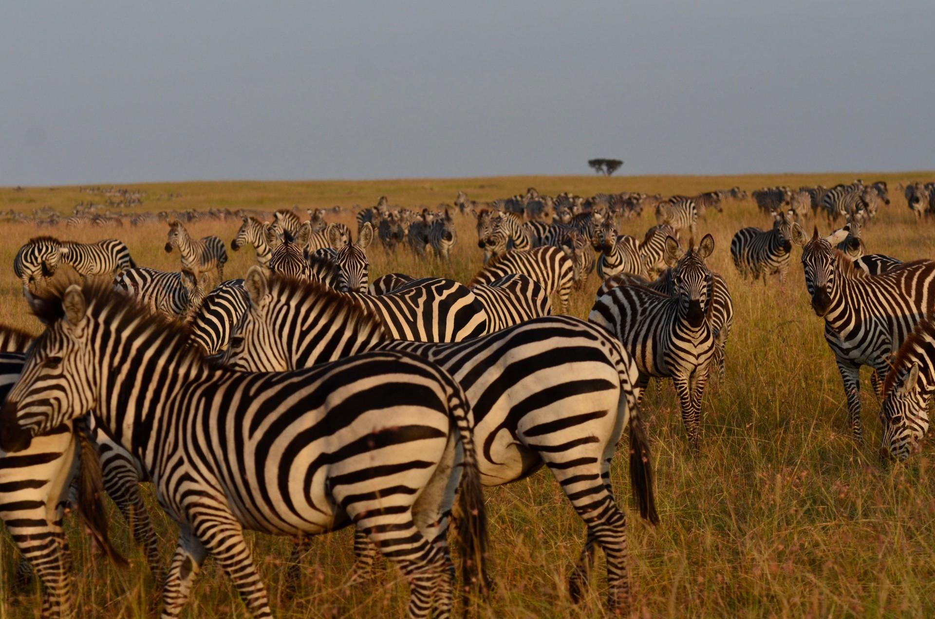 Tangulia Mara Migration 3